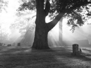 cemetery died from bad spice k2 synthetic weed